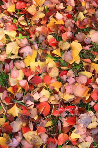 色色な葉っぱたち