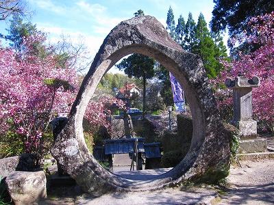 石水寺の海棠