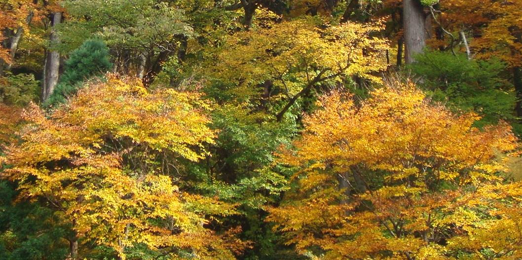 大神山神社の裏山