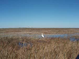 見渡す限り湿原です
