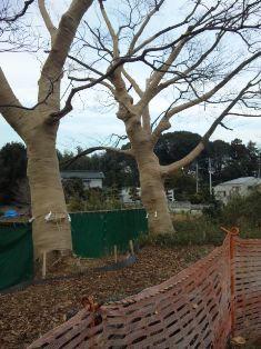 3本の大木