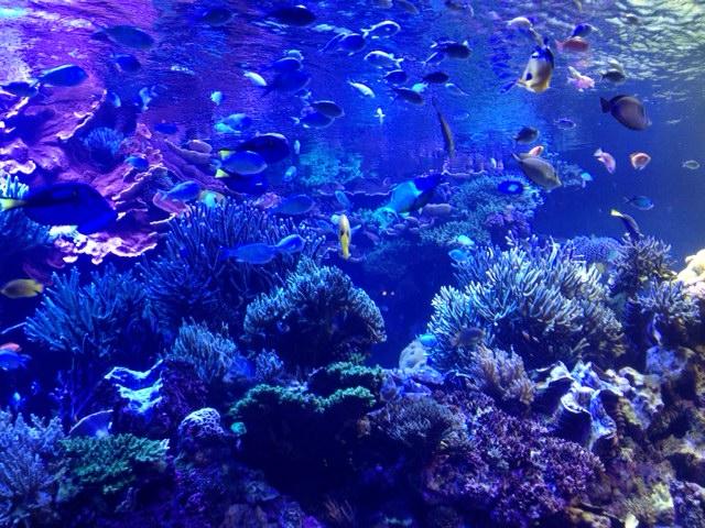 20120817青い海中1