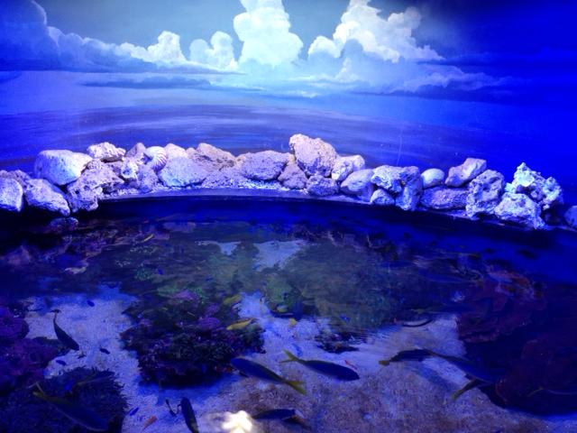 20120817青い写真マジックの海