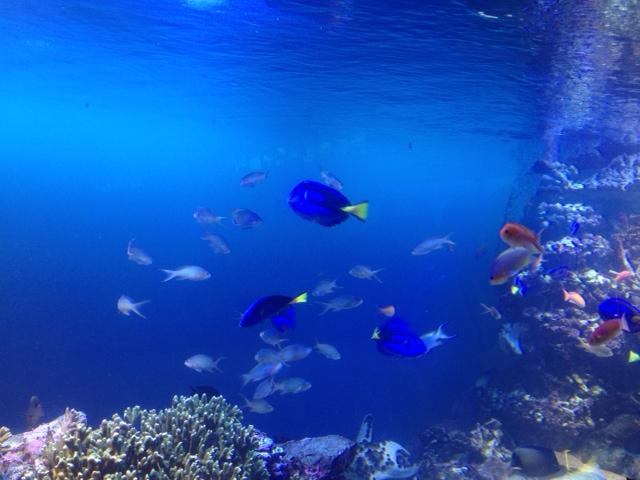 20120817青い海16