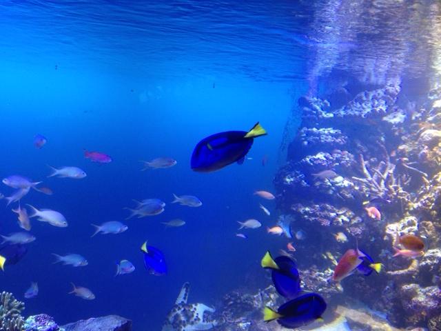 20120817青い海17