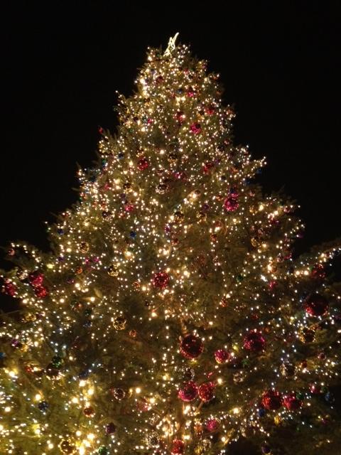 20121207横浜21赤レンガ倉庫クリスマスツリー