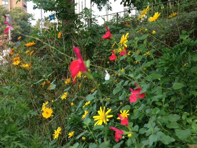 20121007四谷21上智大学への道端の花