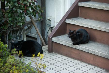 [猫]ウリ双子