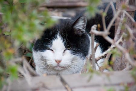 [猫]風を避けてお昼寝