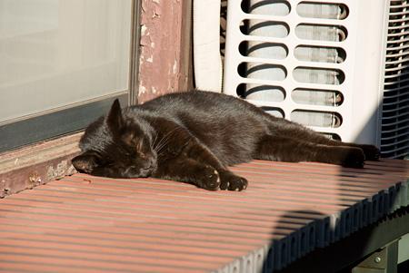 [猫]縁側でお昼寝〜黒猫ちゃん
