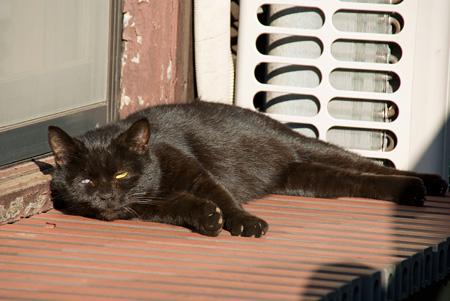 [猫]黒猫ちゃん、起きた