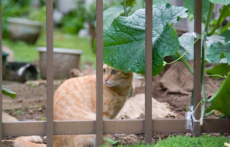 [猫]葉陰にニャンコ