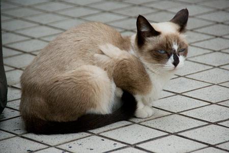 [猫]眠いのニャー