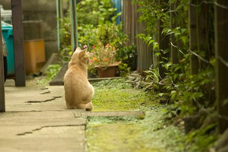 [猫]仔猫の後ろ姿