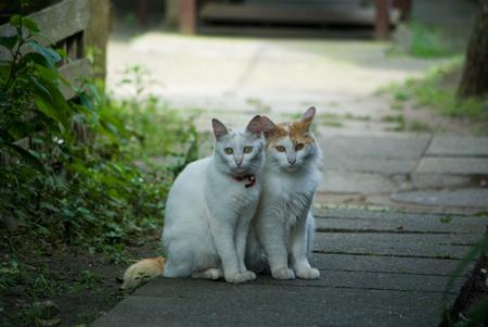 [猫]ずっと仲良し♪ニャンコ