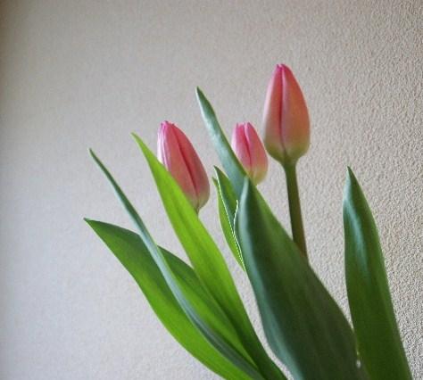 咲くころは…