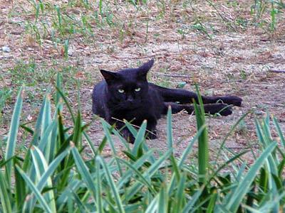 黒猫見っけた