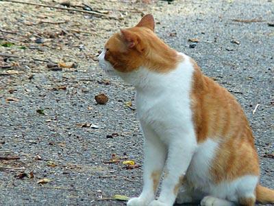とら猫ちゃん ちょっと こっちを向いて