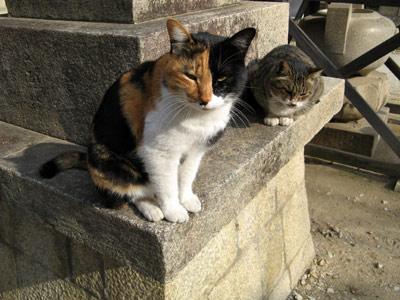 三毛&さば猫