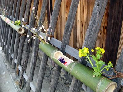 青竹の豆雛