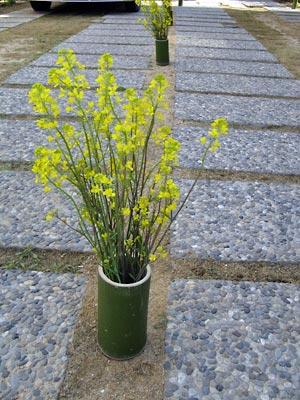 石畳の菜の花の向うに