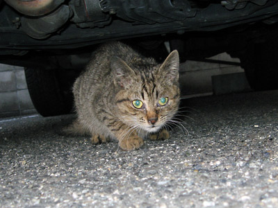 子猫 発見