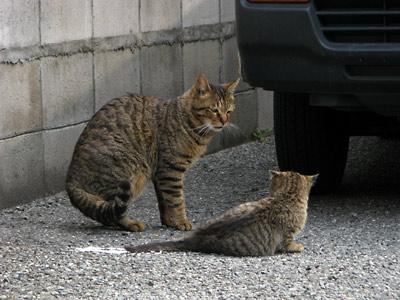 親子猫 会話?