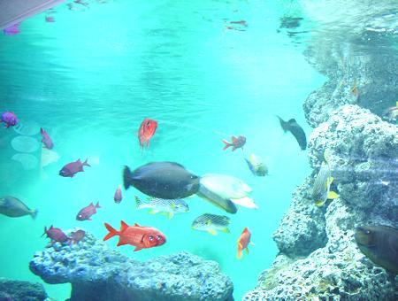 葛西臨海公園水族館(1)