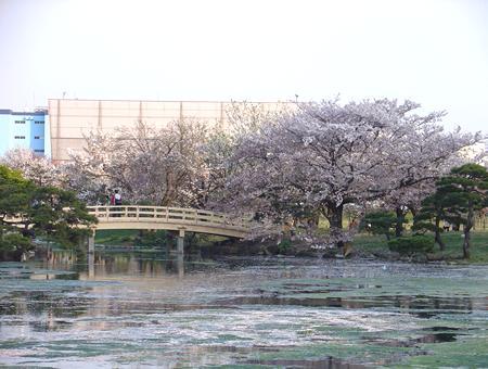 浜離宮恩賜庭園(風景写真1)