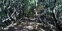 うっそうとした雑木林