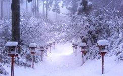 雪だらけの参道
