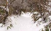 サラサラの雪道を…