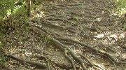 木の根道も…