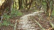 歩幅に合った歩きやすい階段だ