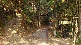 林道(中央)の左が登山道