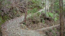 正しいルートは右の細い山道へ…