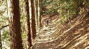 歩きやすい山道も…