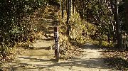 左に行くと城山へ…。ここは右へ。