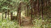 歩きやすい山道を…