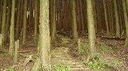 直登の階段だ