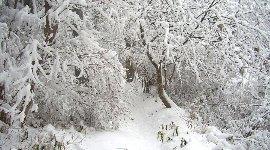 雪だらけの山道