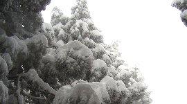 雪が重たそう