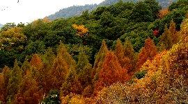 二本松林道周辺の木々