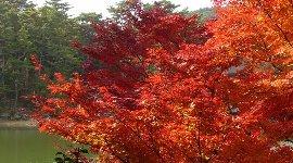 公園にもまだ紅葉が…