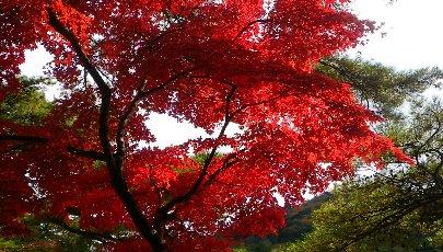 深紅の紅葉もいいですね