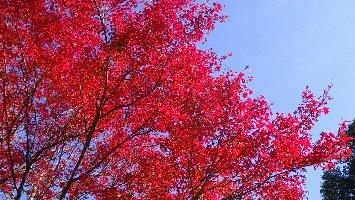 市章山登り口の紅葉