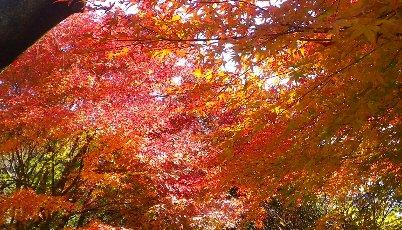 ドライブウェイの紅葉