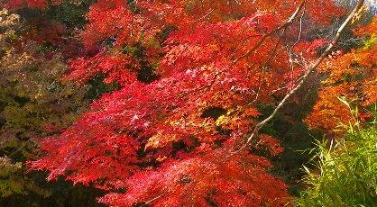 市章山登り口の紅葉です