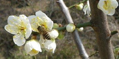 蜜を求める蜂
