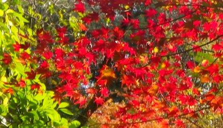 紅葉でした。